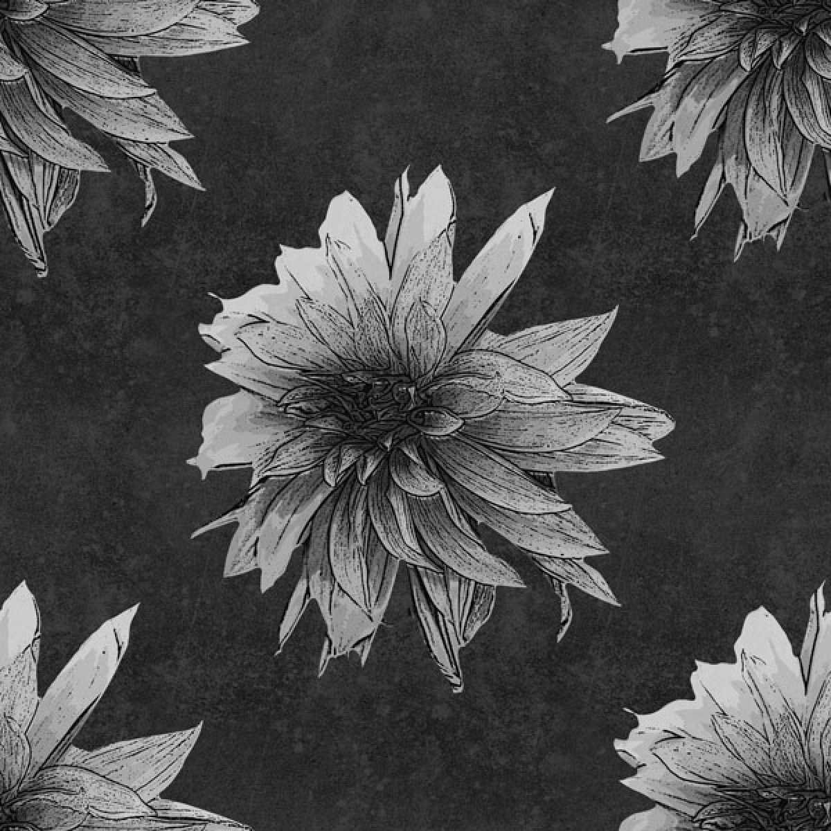 Dahlia antique - schwarz